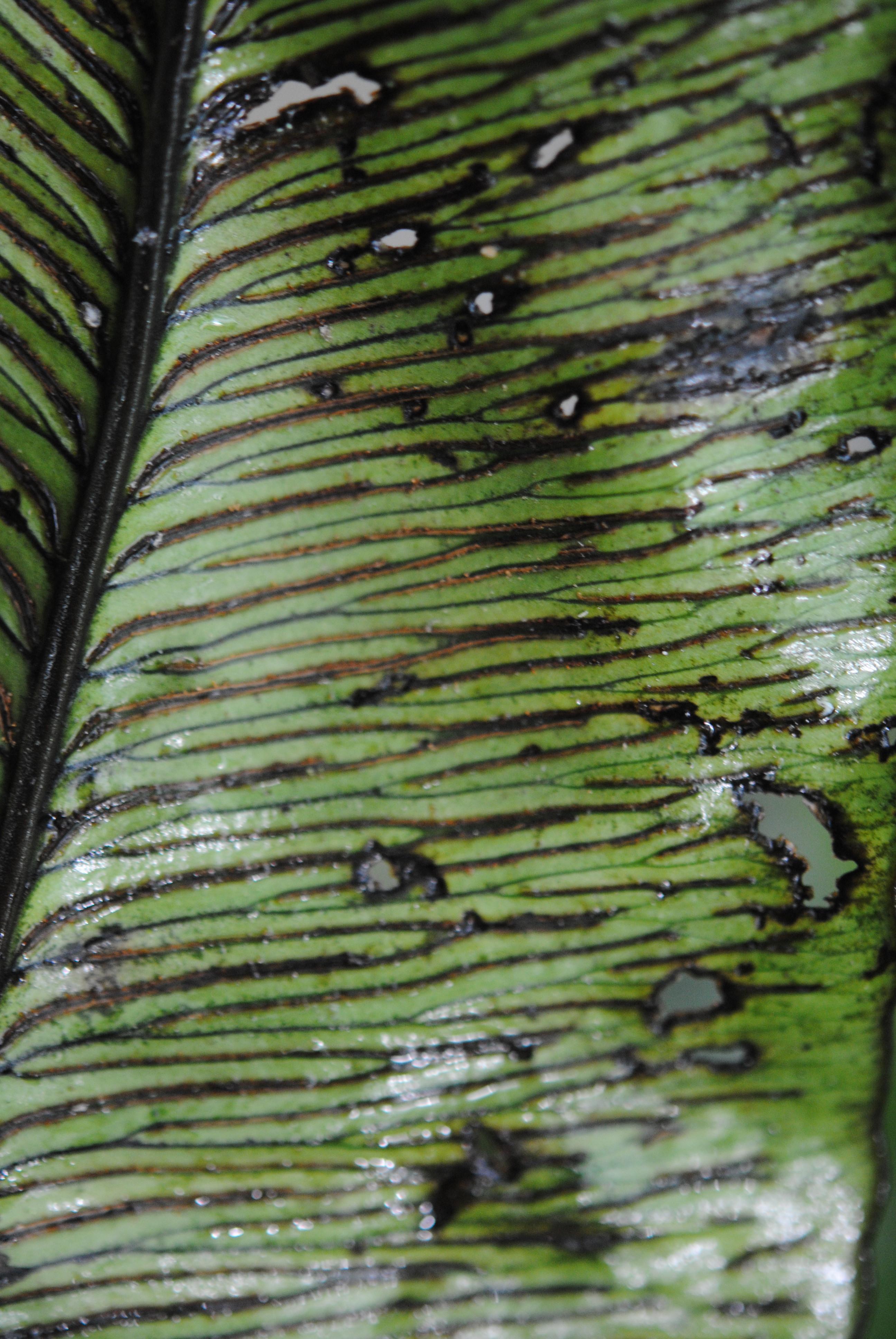frederikssund taxa blume dating