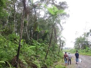 Along the road  to Mamut Copper Mine, Ranau, Sabah