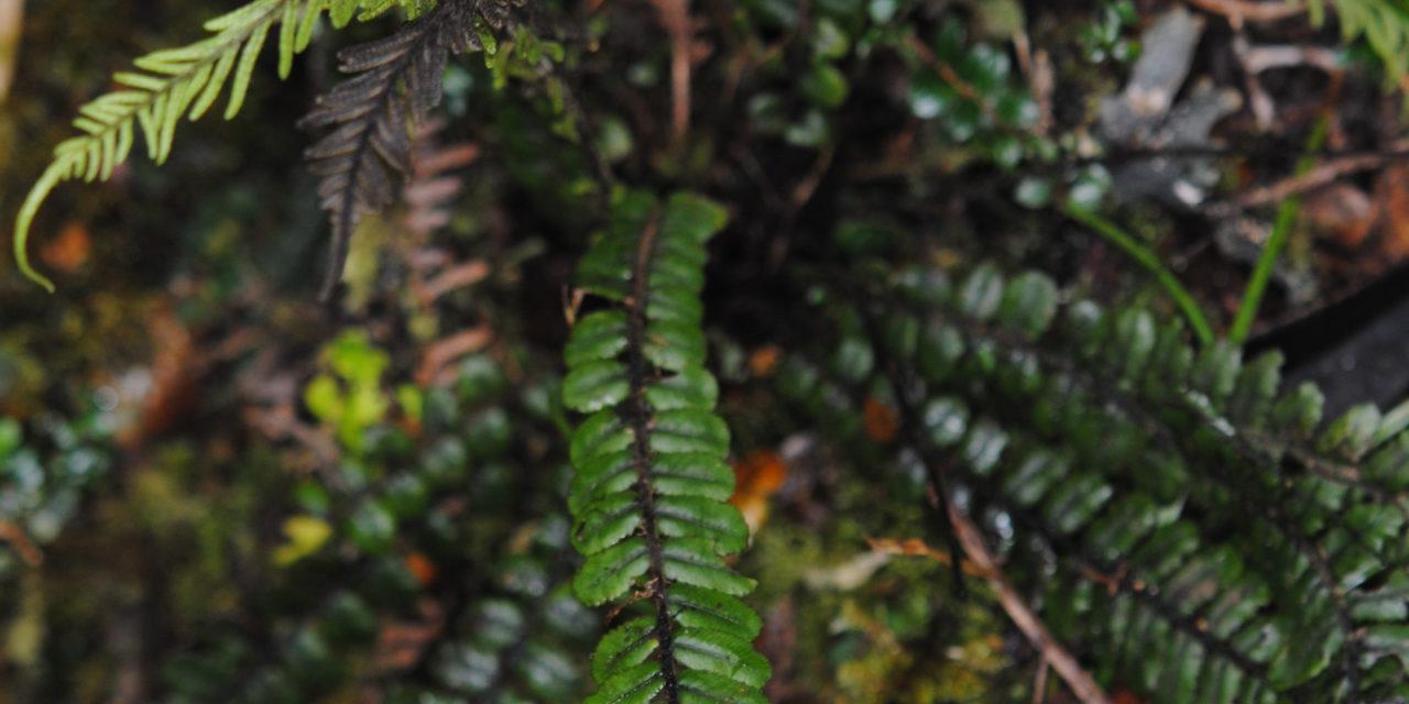 Cranfillia fluviatilis
