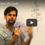 Eddie Watkins discusses the fern life cycle in Costa Rica