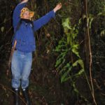 Thelypteris pteroidea