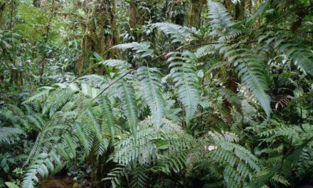 Polybotrya gomezii