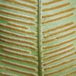 Desmophlebium lechleri